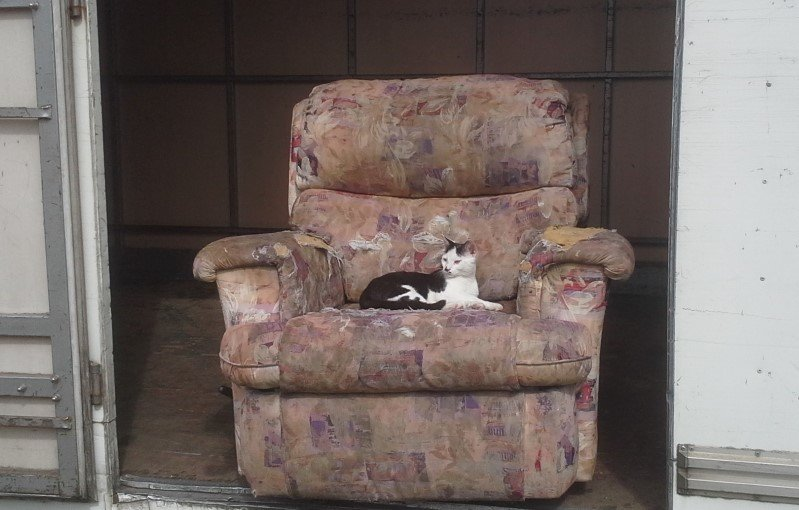 cat on an armchair that is on a moving truck